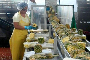 processing of pineapple juice making